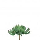 Succulent Pick Echeveria, D18cm, green